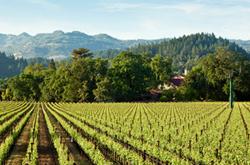 2014-07-winery